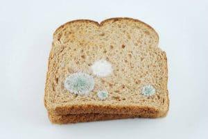 نان کپک زده